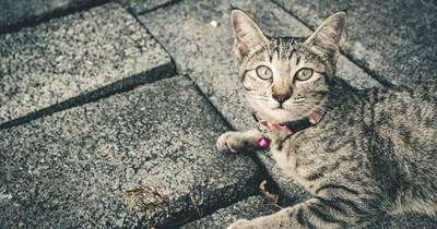 Das darf deine Katze auf keinen Fall essen!