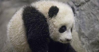 5 überraschende Fakten aus der Tierwelt