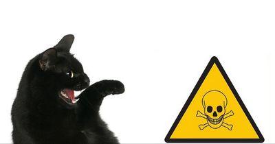 Diese Flohmittel töten deine Katze