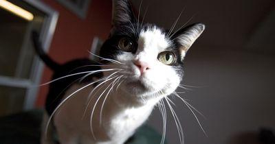 5 Plätze, an denen sich deine Katze aufhält, wenn du nicht hinsiehst