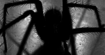 5 hilfreiche Tipps gegen Spinnen im Haus!