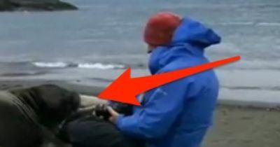 DAS machen wahre Männer mit Seelöwen!