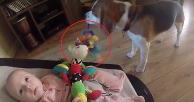 Er stiehlt dem Baby sein Spielzeug - echt gemein!