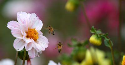 So verhält man sich, wenn Bienen in der Nähe sind.