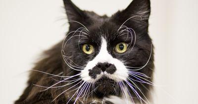 5 Tricks, damit deiner Katze nicht langweilig wird