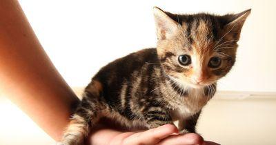 5 nicht ganz so süße Fakten über süße Tiere