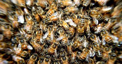 DAS sind die gefährlichsten 6 Insekten für alle Allergiker!