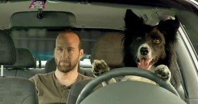 Jetzt lässt der Hund IHN im Auto - dieses Video weckt auf!