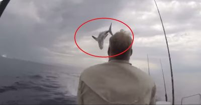 Heftige Hai Attacke: 2 Angler erleiden riesen Schock!