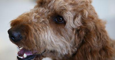 Das sind die 5 häufigsten Schwierigkeiten bei der Hundehaltung