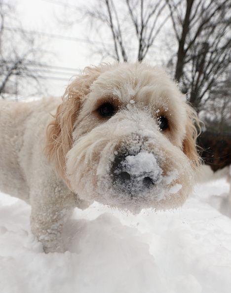 Die 5 beliebtesten Hundenamen
