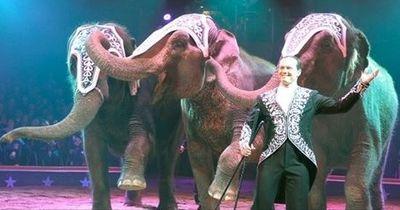Zirkus bricht 100-jährige Tradition und befreit seine Elefanten