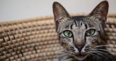 5 Gründe dafür, warum eine Katze besser sieht als ein Mensch