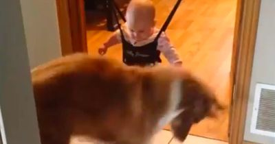 Dieser Hund zeigt dem Baby, wie man richtig springt!
