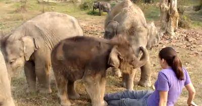 In einer Herde von Elefanten...