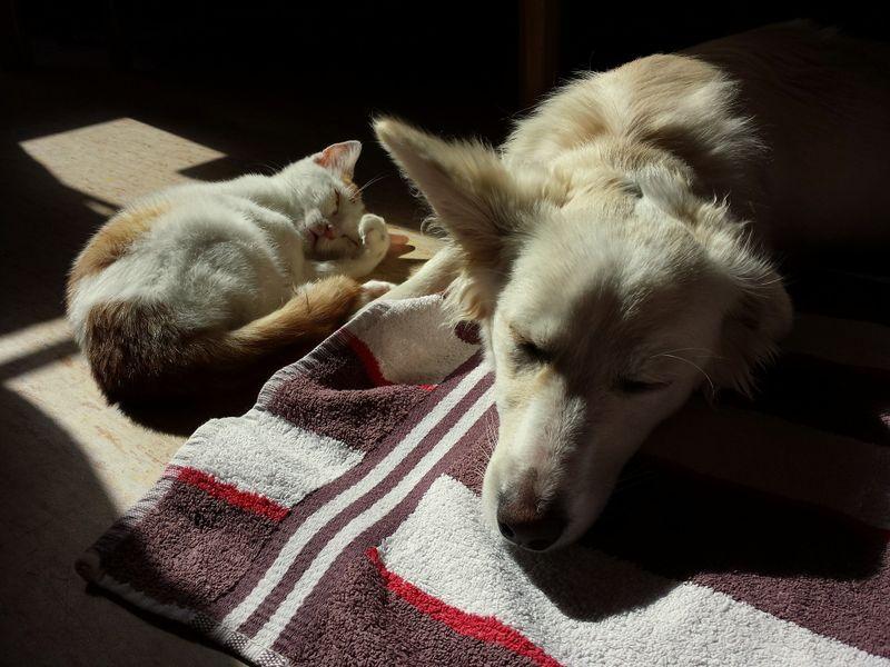 Hunde & Katzen: So wird's was mit dem Zusammenleben!