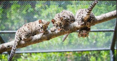 Diese Tiere wird es wohl bald nicht mehr geben: Kennst du sie überhaupt?