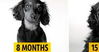 Dieser Hund altert in wenigen Augenblicken!