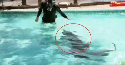 Was tun, wenn ein Aligator im hauseigenen Pool schwimmt?