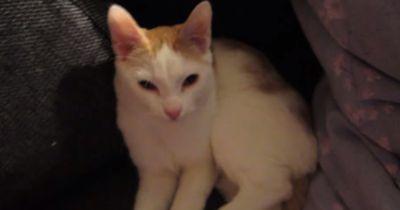Wegen ihrer abnormalen Pfote, wollte diese Katze jahrelang niemand adoptieren.