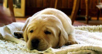 Wie lange kann man seinen Hund eigentlich alleine lassen?