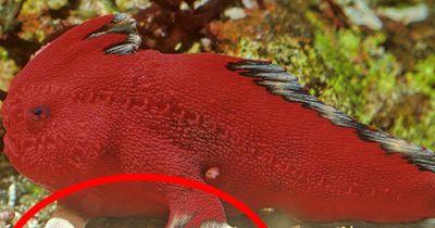 Dieser Fisch hat richtige Hände - Doch es gibt nur sehr wenige von seiner Art