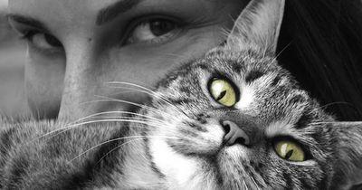 So versteht ihr die Körpersprache der Katze!