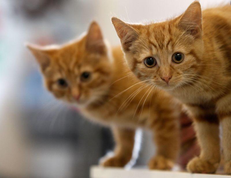 Große Typen, kleine Kätzchen
