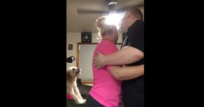Immer wenn die Menschen sich umarmen, tut der Hund etwas Süßes!