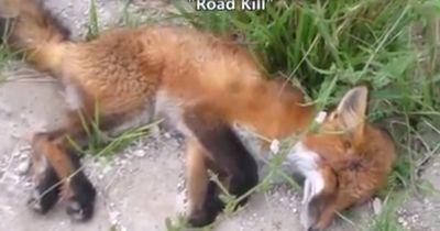 Diese Frau hielt an, um einen toten Fuchs zu beerdigen... doch plötzlich wendete sich alles!