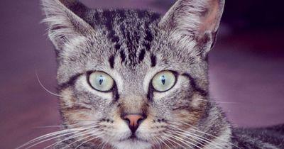 Angst vor Katzen? Viele Menschen haben diese Phobie