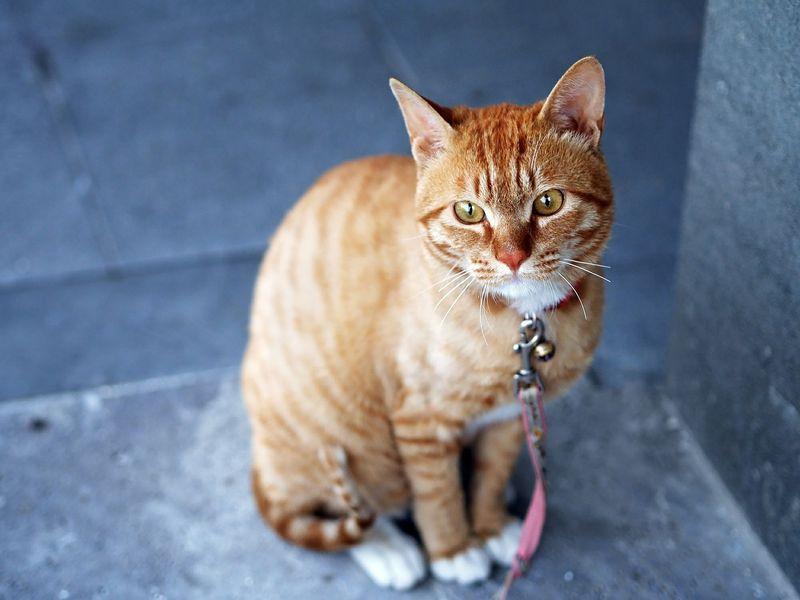 Ihr wisst nicht, wie eine Katze schnurrt?