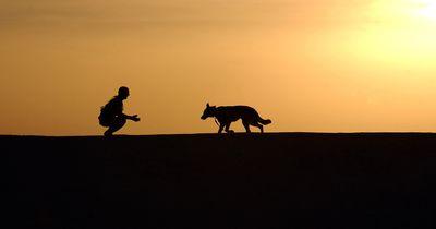 Engere Bindung zum eigenen Hund aufbauen