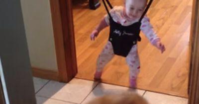 Seht selbst, was dieses Baby von einem Border Collie lernt
