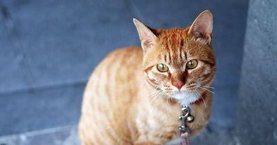 Kann eine Katze den Menschen wirklich lieben?
