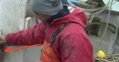 """""""Wir dachten, es wäre nur ein Baumstamm, der im Meer trieb"""" - Fischer machen den Fang ihres Lebens"""