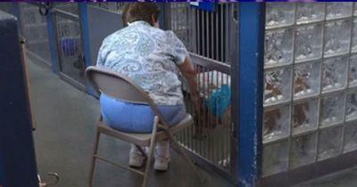 Was diese Frau mit Hunden im Tierheim tut, rührt Millionen zu Tränen... zu Recht!
