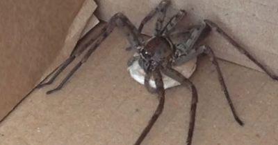 Die Spinne war nicht die einzige Überraschung!