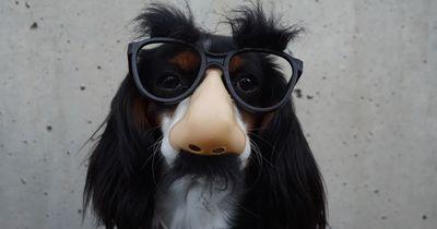 Was glaubt ihr, ist die klügste Hunderasse?