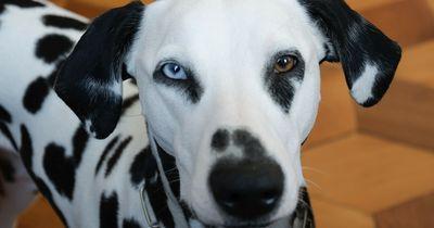 Ist dein Zuhause giftig für deinen Hund?