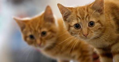 Mag deine Katzen Umarmungen?