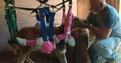 Das Pony bekommt eine zweite Chance im Leben