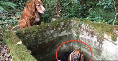 Sein Freund fiel in einen Brunnen - Er wich eine Woche lang nicht von seiner Seite!