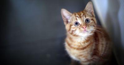 5 Gefahrenquellen für Katzen