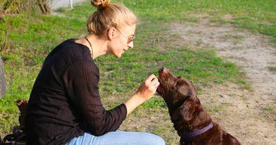 Mit diesen 5 Gesten sagst du deinem Hund, dass du ihn liebst!
