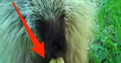 Die 5 berühmtesten Tiere des Internets