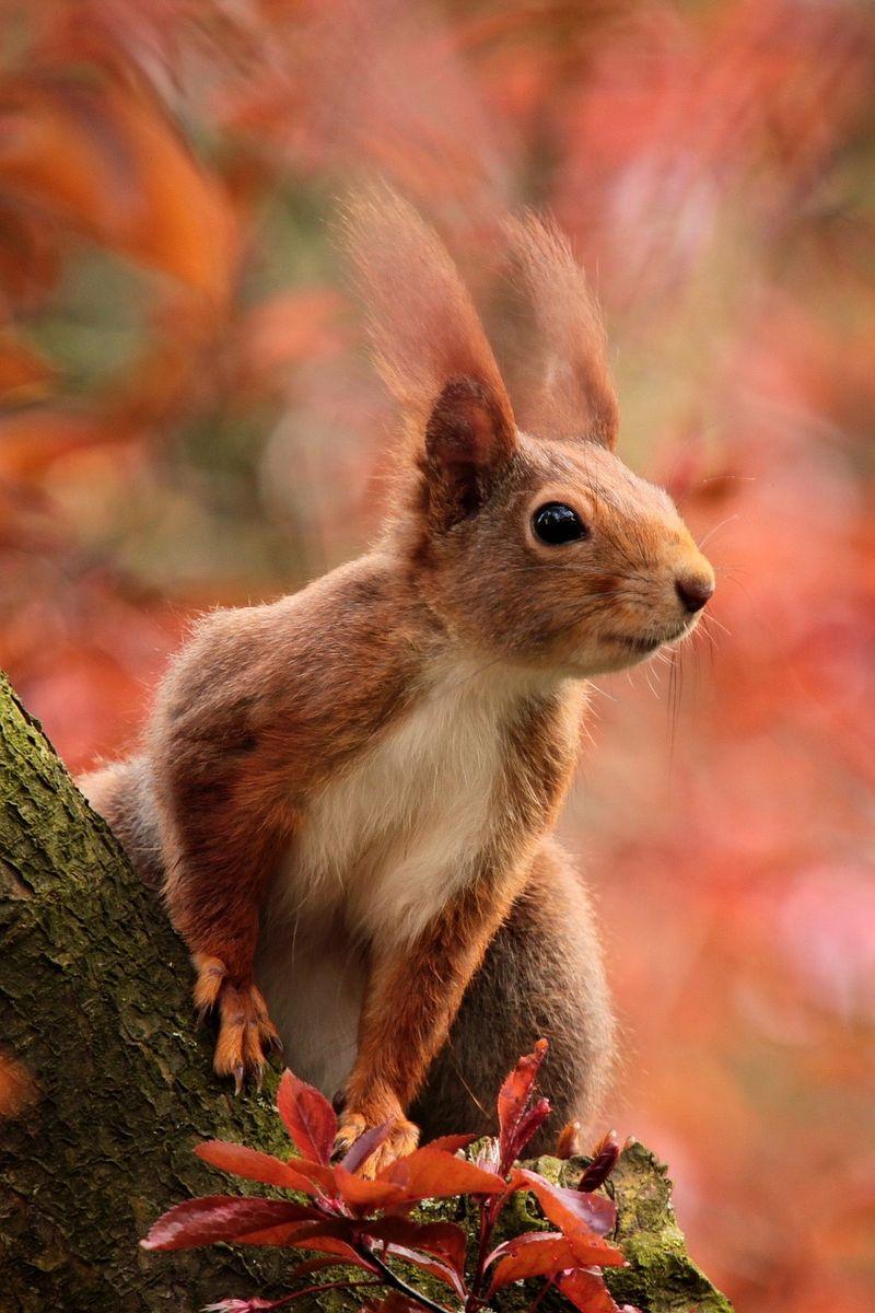 Baby-Eichhörnchen brauchen oft Hilfe von uns Menschen
