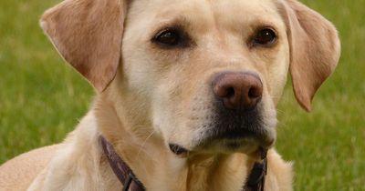 Die häufigsten Hundekrankheiten!
