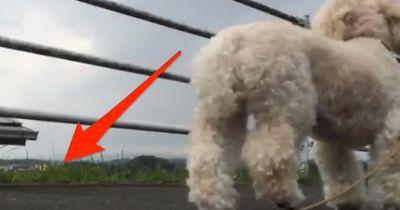 Was macht euer Hund, wenn ihr in Ohnmacht fallt?