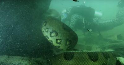 Unter Wasser stieß er auf diese 6 m lange Schlange!
